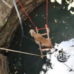 Kuyuya düşen leopar böyle kurtarıldı