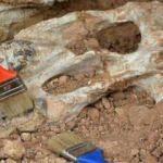 Heyecanlandıran keşif! 9 milyon yıl öncesine ait