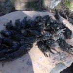 Kırklareli'nde kuş ölümleri