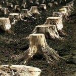 İzinsiz ağaç kesmenin cezası nedir? Ağaç kesenler nereye şikayet edilir?