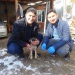 Yaralı yavru köpeğe muhtar sahip çıktı