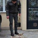 Karacayı öldüren avcı aranıyor
