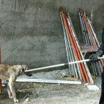 Elazığ'da çatıda mahsur kalan köpek kurtarıldı