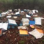 Muğla'da ayılar arı kovanlarını parçaladı