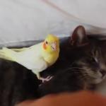 Kedi ve kuşların dostluğu şaşırttı!