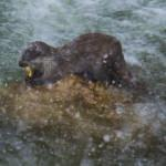 Balık yerken görüntülendi! Nesli tehlikede...