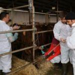 ASÜ'den hayvancılık ve ucuz et için önemli hamle!