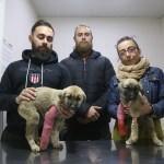 Köpek yavrularına işkence iddiası