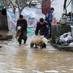 Selde mahsur kalan koyunları itfaiye kurtardı