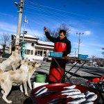 Sokak köpekleri seyyar balıkçının yolunu gözlüyor