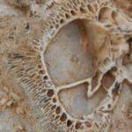 O ilimizde tesadüfen bulundu! Tam 98 milyon yıllık...