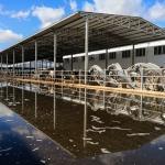 İzmir'de rekor yağış tarım arazilerini göle döndürdü