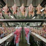 40 yıllık tavuk firmasından konkordato talebi