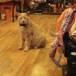 """Papyonlu kedi """"Behlül"""" dükkanın maskotu oldu"""