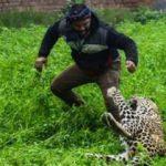 Leopar köye saldırdı: 6 yaralı
