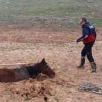 Çamura saplanan at kurtarıldı
