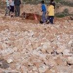 Cizre'de çamura saplanan ineği itfaiye kurtardı
