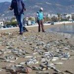 Korkunç görüntü! Binlercesi sahile vurdu