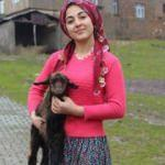 Siirtli Merve devlet desteğiyle hayvancılık yapıyor
