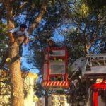 Ağaçta mahsur kaldı! Kurtarılınca bakın ne dedi?