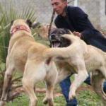 Bu köpeklerin bulunduğu ortama kimse yaklaşamıyor!