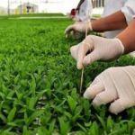 Tohum üretimi 1 milyon 50 bin ton oldu