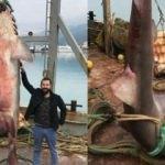 Balıkçıların ağına takıldı! Görenler inanamadı