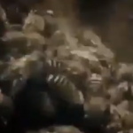 Dev eşek arısının bal arılarının saldırısına uğradığı an!