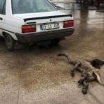 Cani sürücünün cezası belli oldu