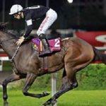 12 birinciliği bulunan İngiliz yarış atı, icralık oldu