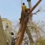 Ağacı kesen adam hayatının şokunu yaşadı!