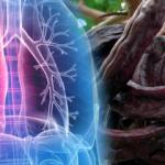 Akciğer lekesinin belirtileri nelerdir? Akciğer lekesi öldürür mü?