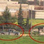 Yükleyip götürdüler! Türkiye sınırında tehlikeli görüntü