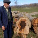 Ağacı kesti gözlerine inanamadı! Şaşkına çeviren silüet