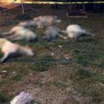 Ankara'daki köpek vahşetiyle ilgili yeni gelişme!