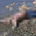 Hatay'da sahilde cansız beden bulundu