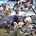 Akdamar Adası'nda bahar güzelliği