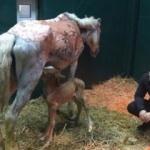 Büyükada yangınında ağır yaralanan at, doğum yaptı