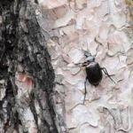 İstanbul'un ormanlarını 'gladyatör' koruyacak