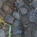 Kuyuda mahsur kalan 17 kaplumbağa ölmek üzereyken kurtarıldı