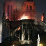 Notre Dame mucizesi: 200 bin arı yangından sağ çıktı!