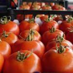 Rusya'ya ihracata domates, mandarin ve limon katkısı