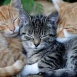 İstanbul'da vahşet! Anne ve yavru kediler öldürülmüş halde bulundu