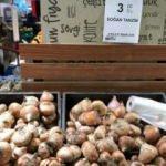 Stokçular ellerinde kalan çürük soğanı satışa çıkardı