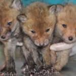 3 yavru bu halde bulundu! Hemen korumaya alındı