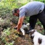Cins köpekleri buluyor, kilosunu 9 bin Euro'dan satıyor
