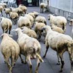 Sınıf kapanmasın diye koyunlara kayıt yapıldı