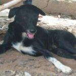 Annesinin diri diri gömdüğü bebeği köpek Ping Pong kurtardı