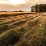 Arazi toplulaştırma ve kamulaştırma kararları
