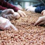 Giresun'dan 50 milyon dolarlık fındık ihracatı